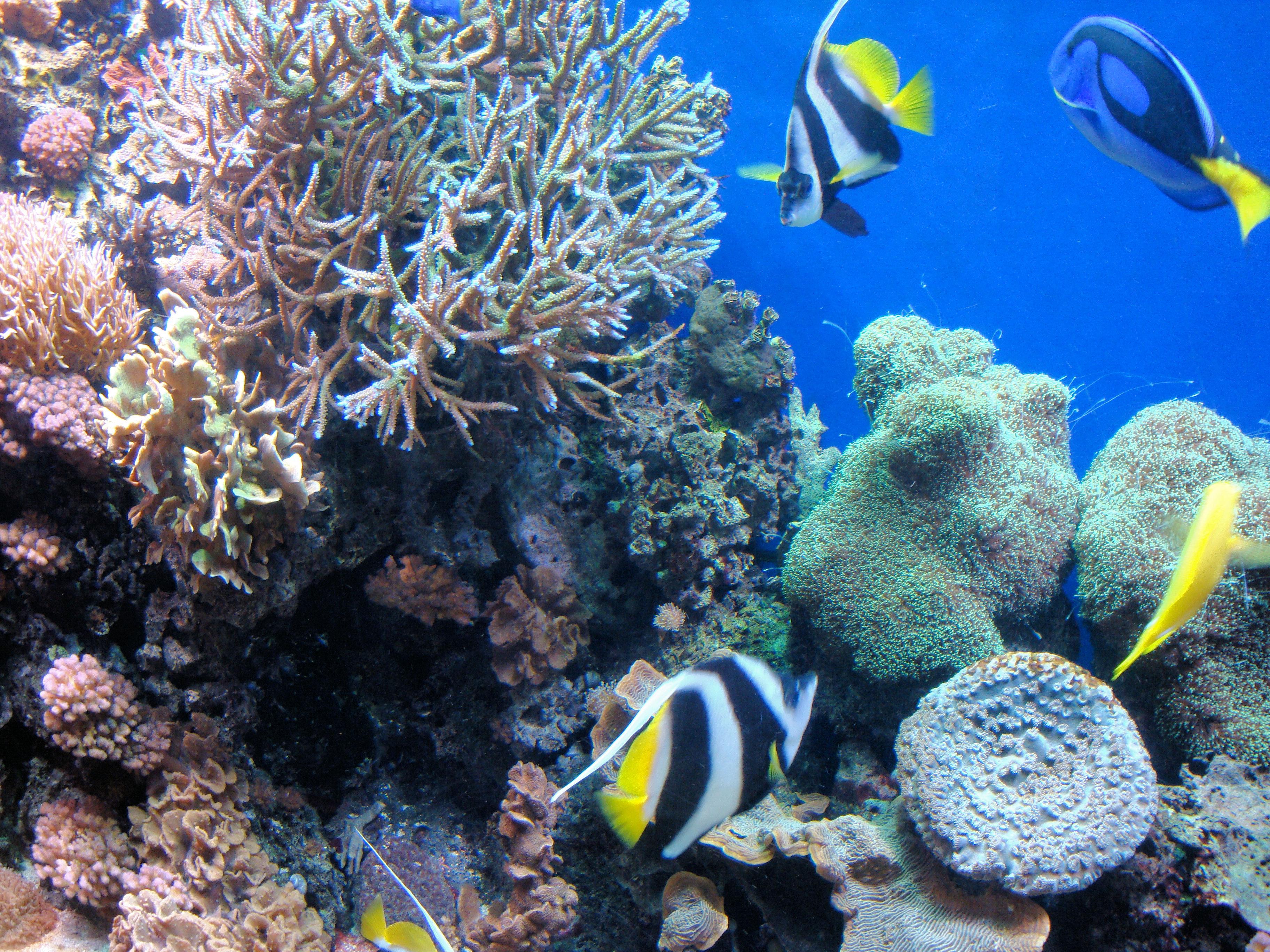 File Dsc26582 Monterey Bay Aquarium California Usa