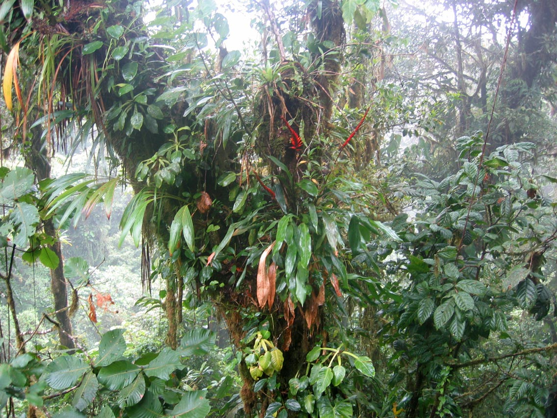 epiphytes and tropical trees relationship goals