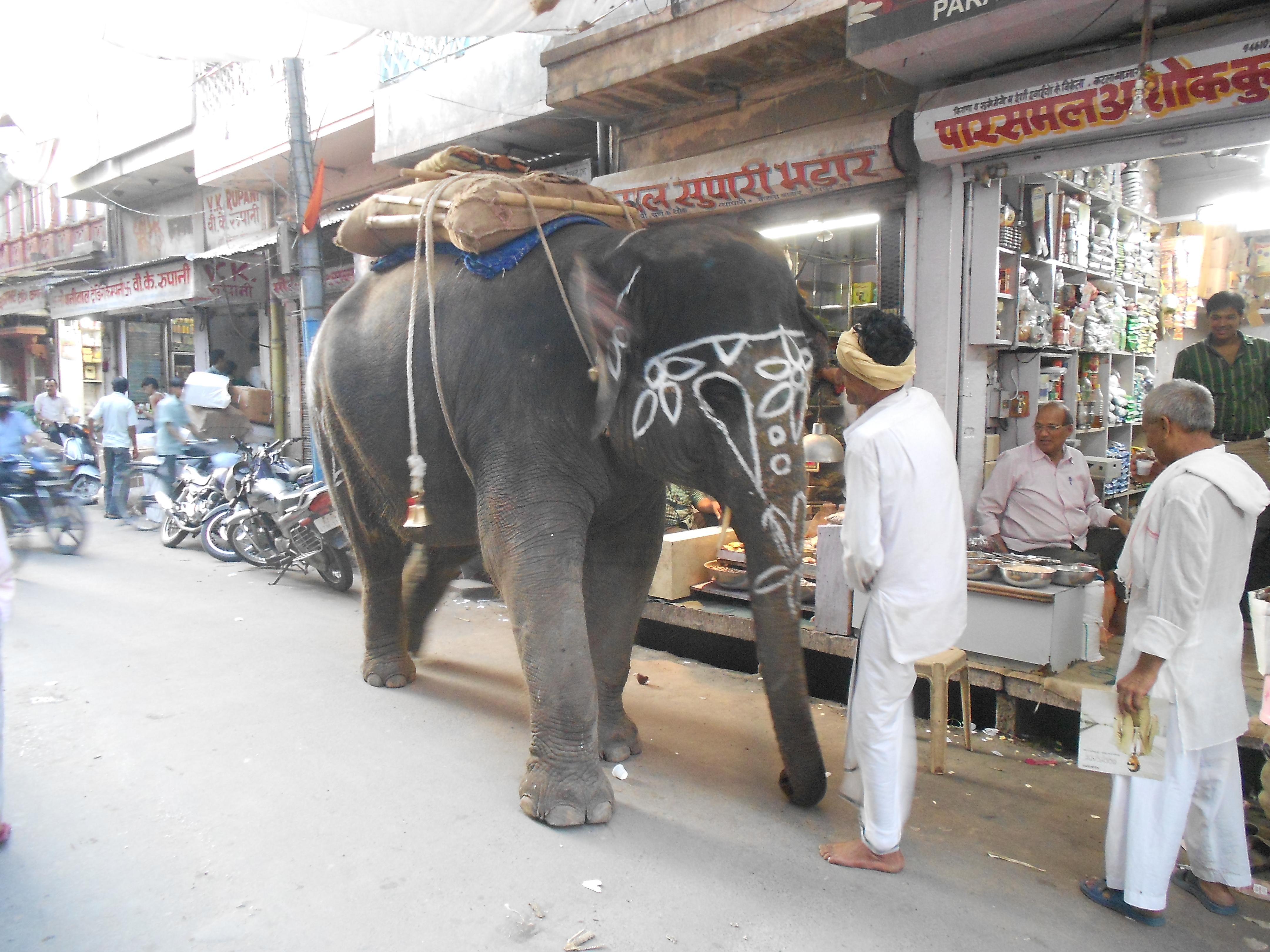 File Elephant In Jodhpur Rajasthan Jpg Wikimedia Commons