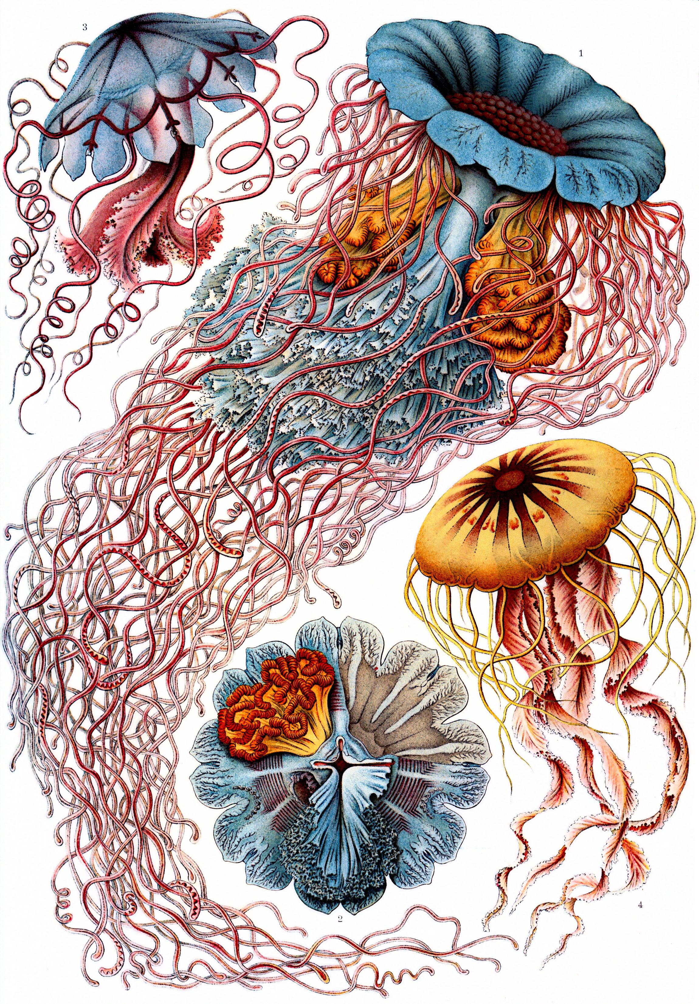 art forms of nature  u2013 the ernst haeckel collection