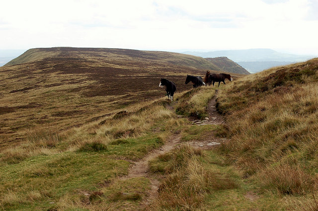 Hill ponies on the ridge to Black Hill - geograph.org.uk - 1502588