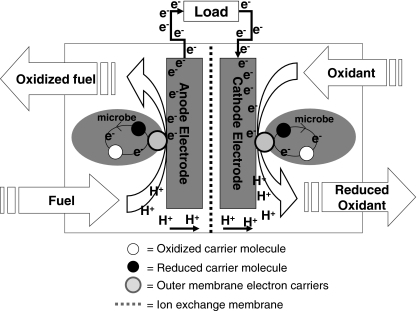 Bicrobial fuel cell Concept that generates electricty using bacteria