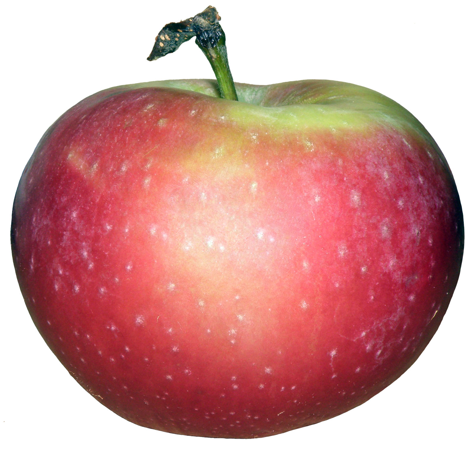 Description POL apple.jpg