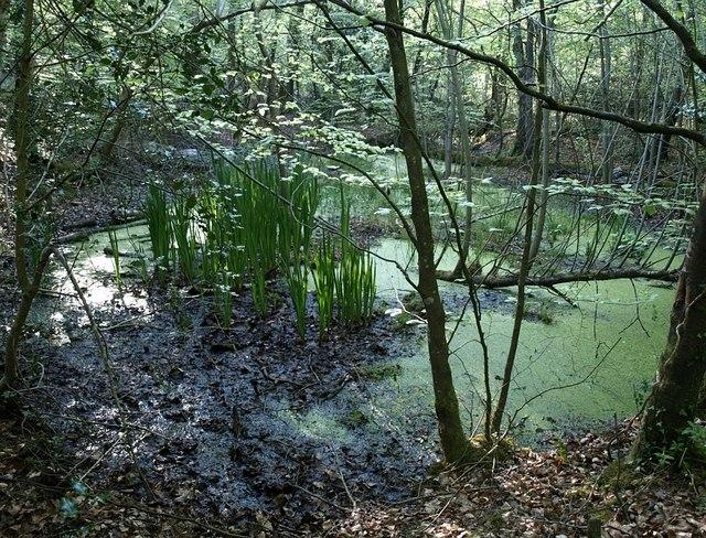 Pond near Decoy Lake - geograph.org.uk - 800353