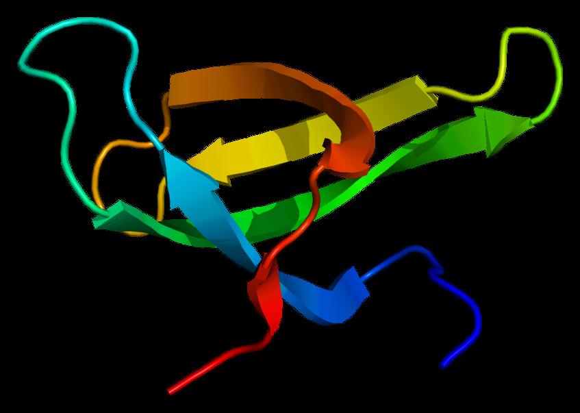Survival Of Motor Neuron