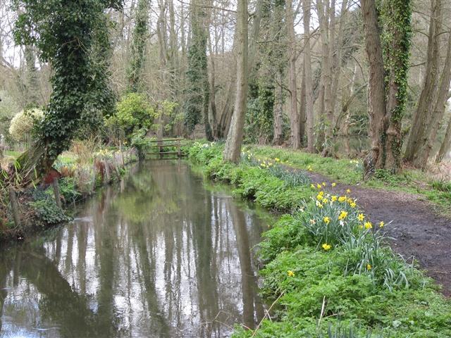 Walks In Surrey Next To Riverside With Dog