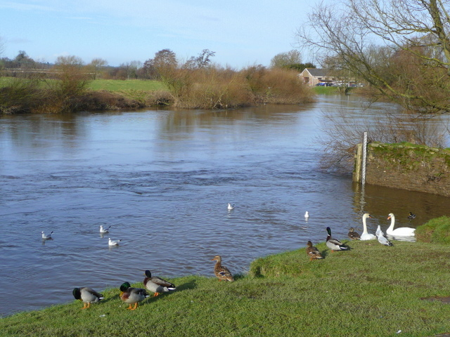 River Wye at the Riverside, Ross-on-Wye. - geograph.org.uk - 1134368