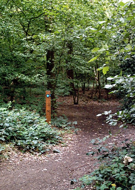 Hockley woods