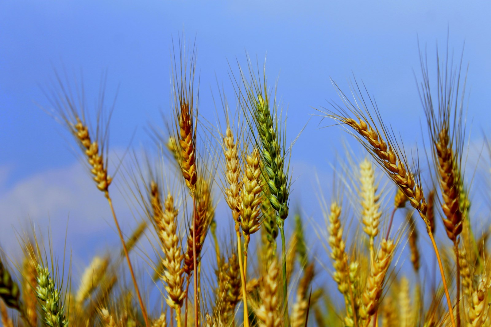 Wheat And Rice Cake