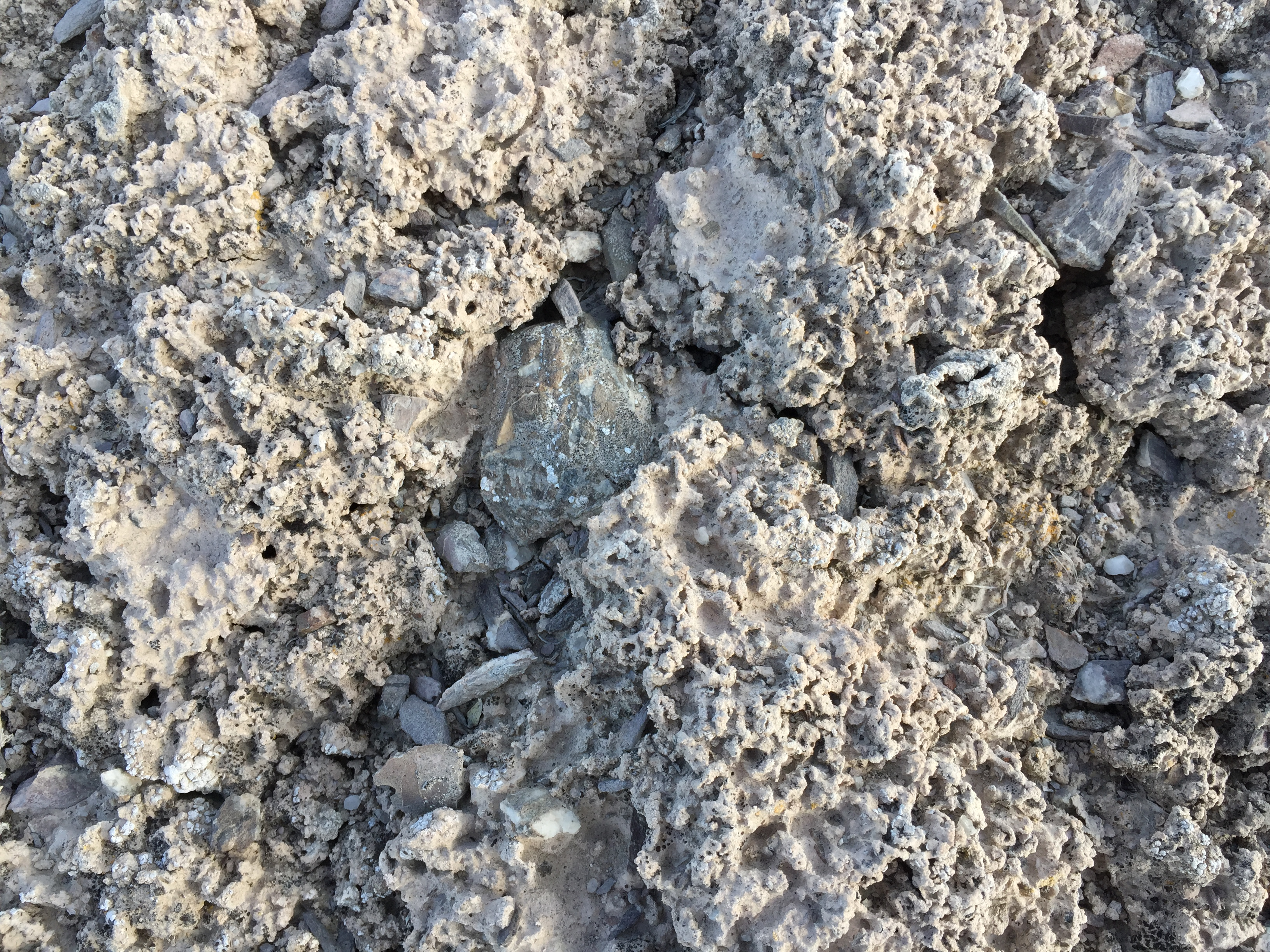 File 2015 04 18 18 09 25 unusual bumpy soil surface on the for Kinds of soil wikipedia