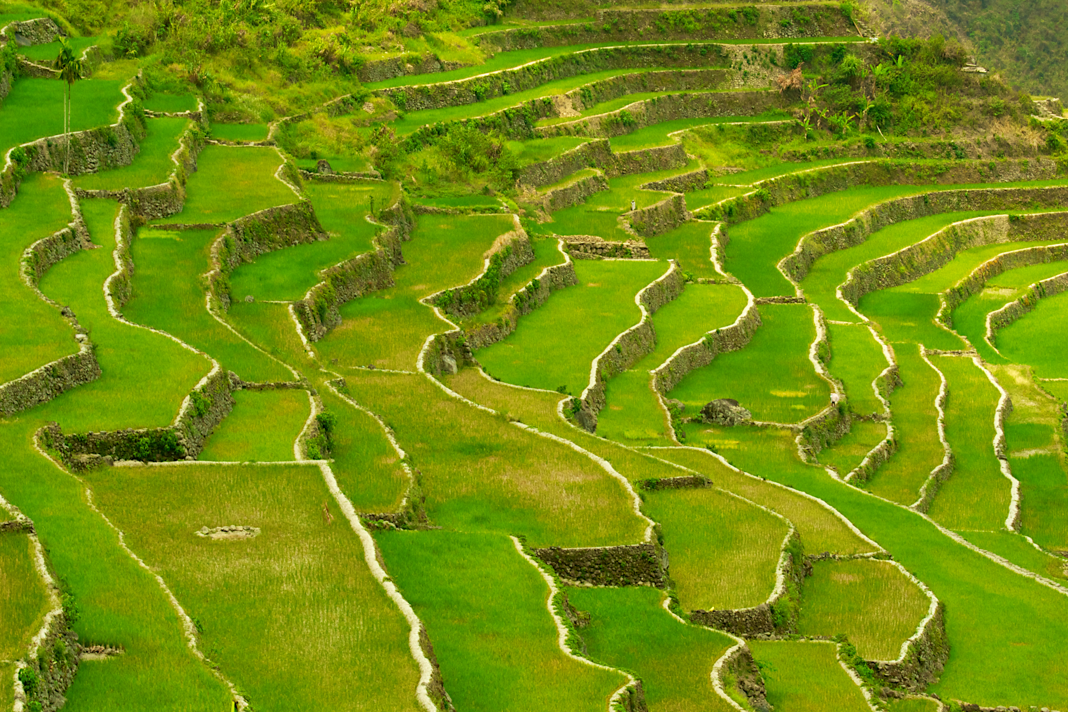 Rice terraces of the philippine cordilleras sights for What is terracing