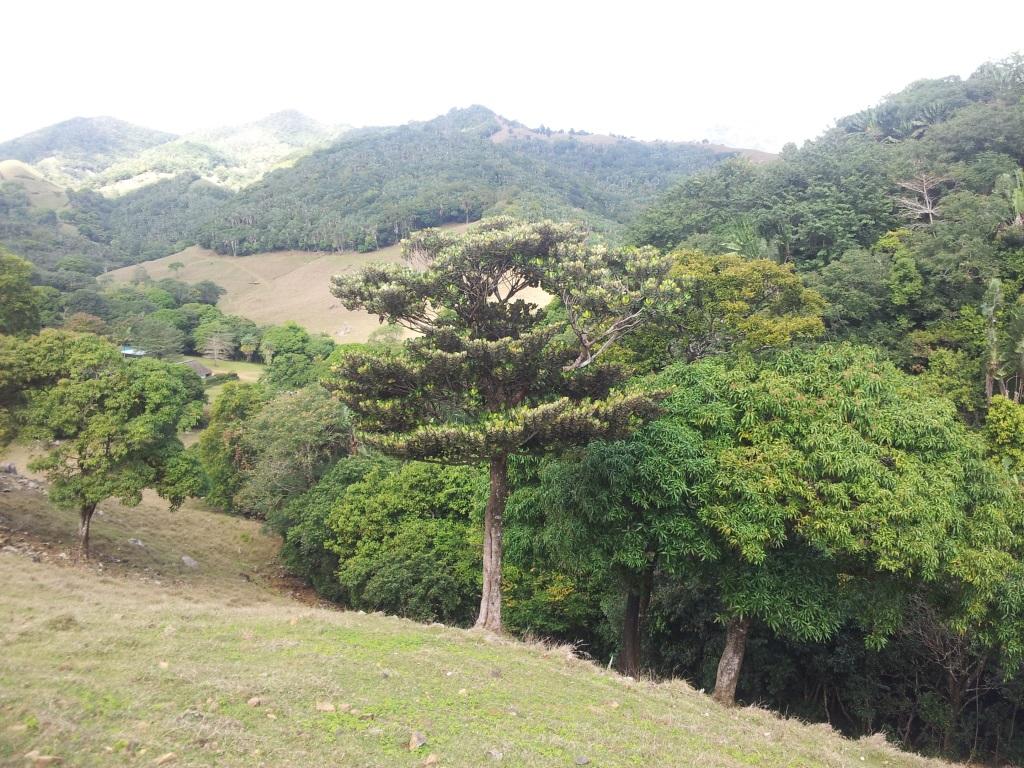 FileBois de Natte a Grandes Feuilles  Labourdonnaisia  ~ Reserve De Bois