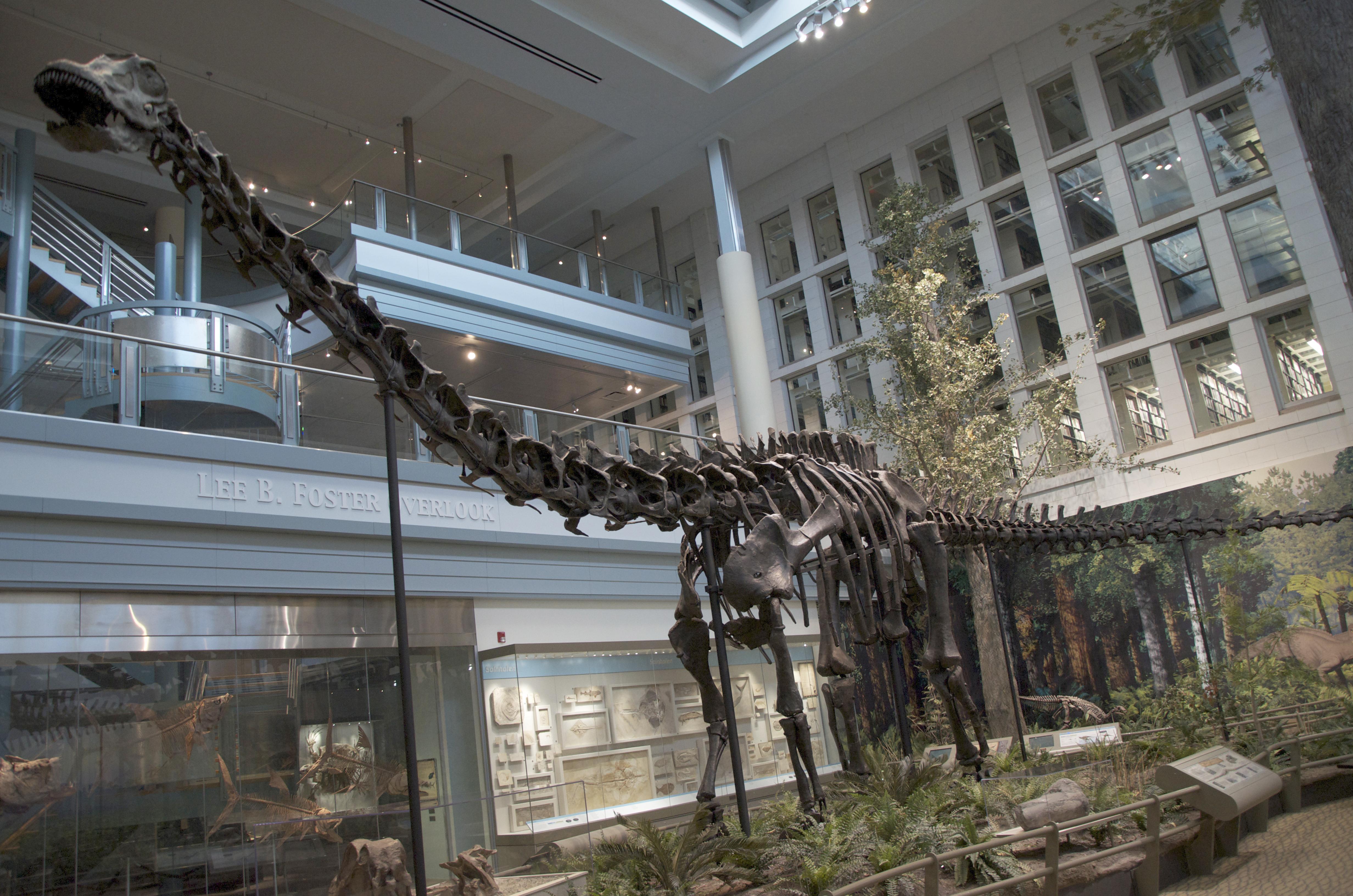 Diplodocus - Wikipedia 68c302c2ed60