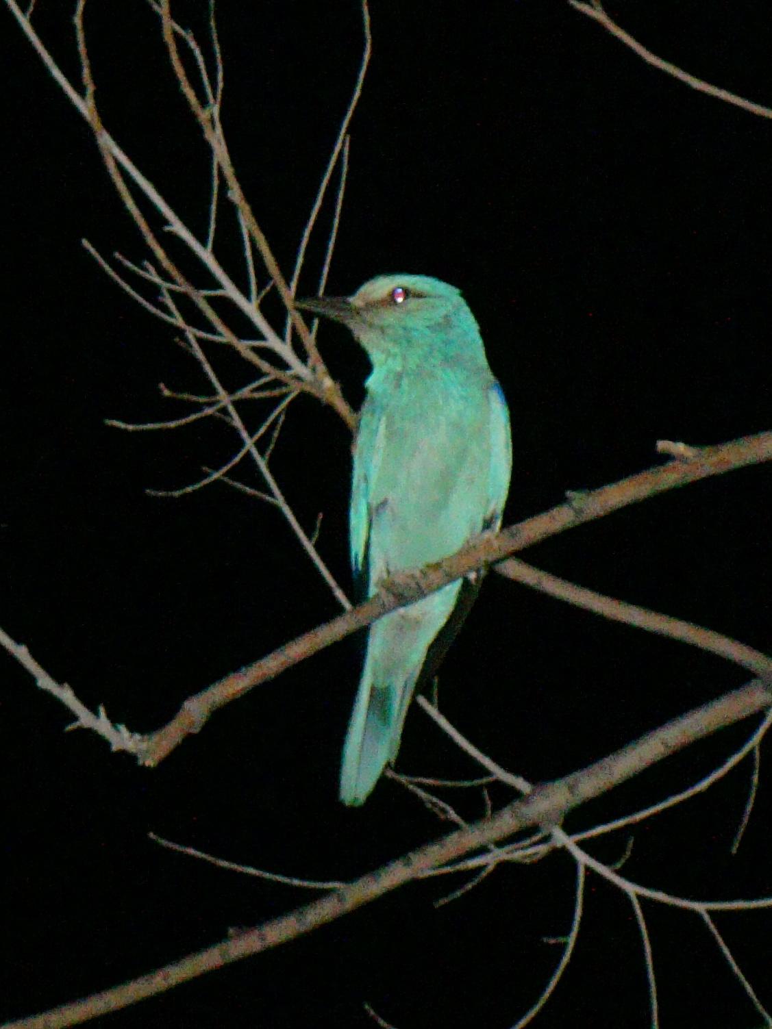 Rare Species Of Birds List of birds of Kazak...