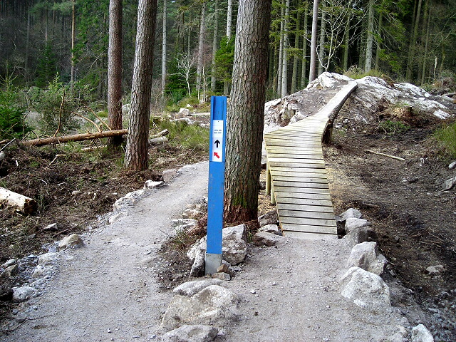 Cycle Trail in Dalbeattie Forest - geograph.org.uk - 392803