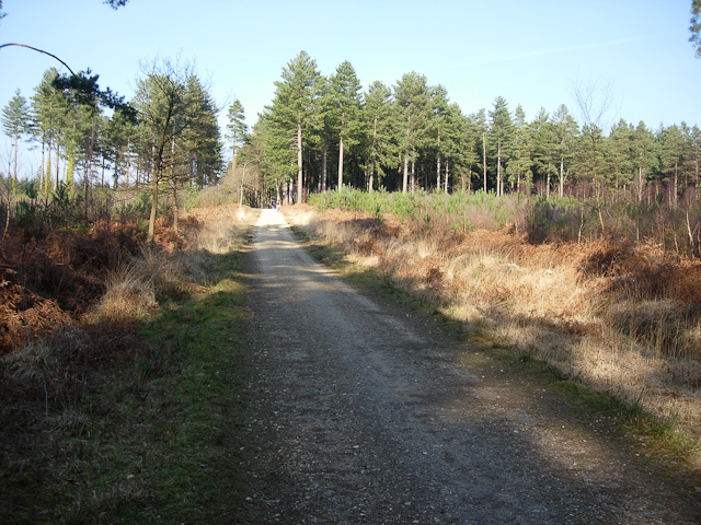 Cyclepath through Deerleap Inclosure - geograph.org.uk - 1306542