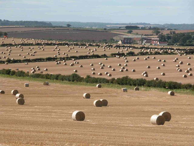 East Lothian in September. A nice crop of bales, looking west towards Northrig Farm, with Haddington 3 km beyond.