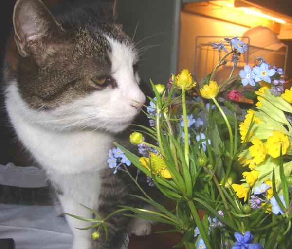 Cats Urine Smells Like Cat Food
