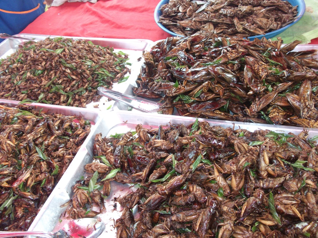 File:Fried Lethocerus Indicus in Thailand market.jpg