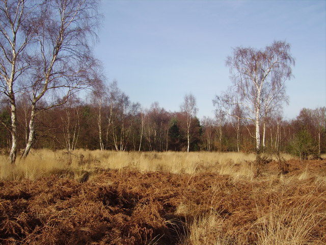 Grasslands in Yateley Common Country Park - geograph.org.uk - 664670