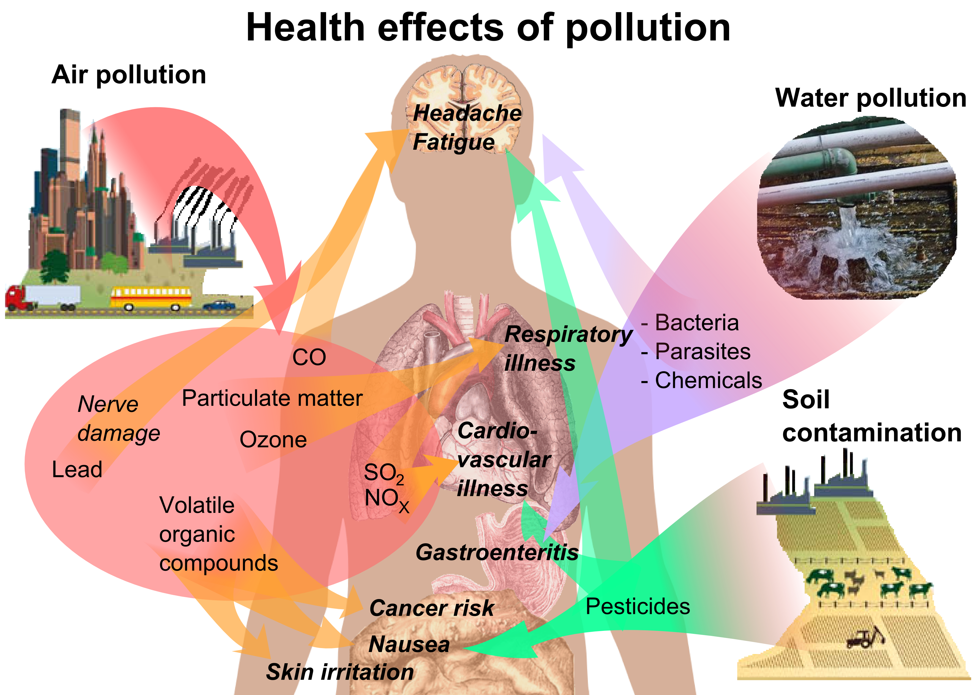 human effects on our environment Chemicals in the water also have negative effects on our health pesticides – can damage the nervous system and cause cancer because of the carbonates and organophosphates that they contain chlorides can cause reproductive and endocrinal damage.
