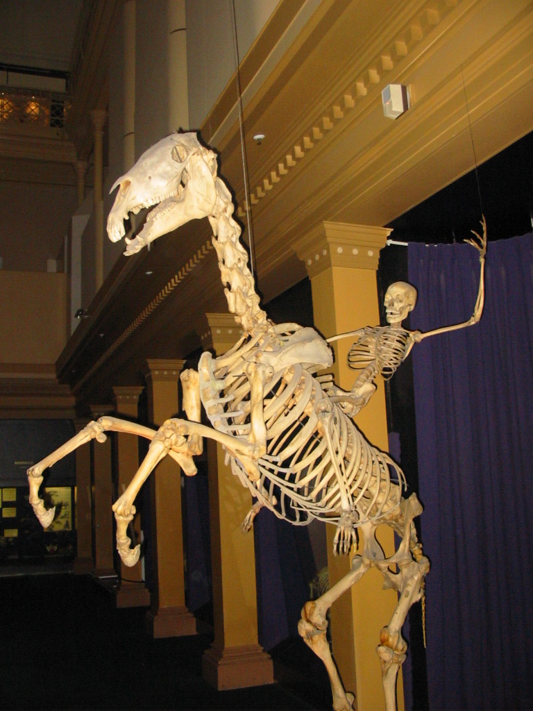 yee-haw!! it is a skellyton from the wilde west ...