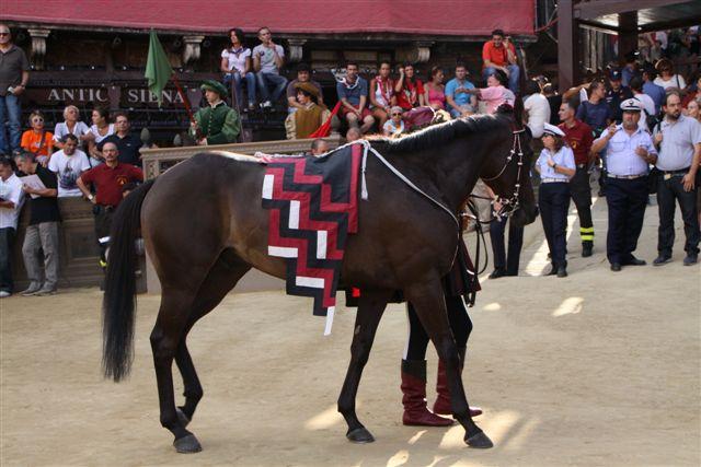 Il cavallo della Civetta