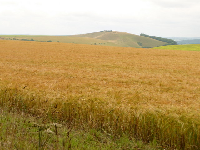 Melbury Abbas, cornfield and Melbury Hill view - geograph.org.uk - 1405774