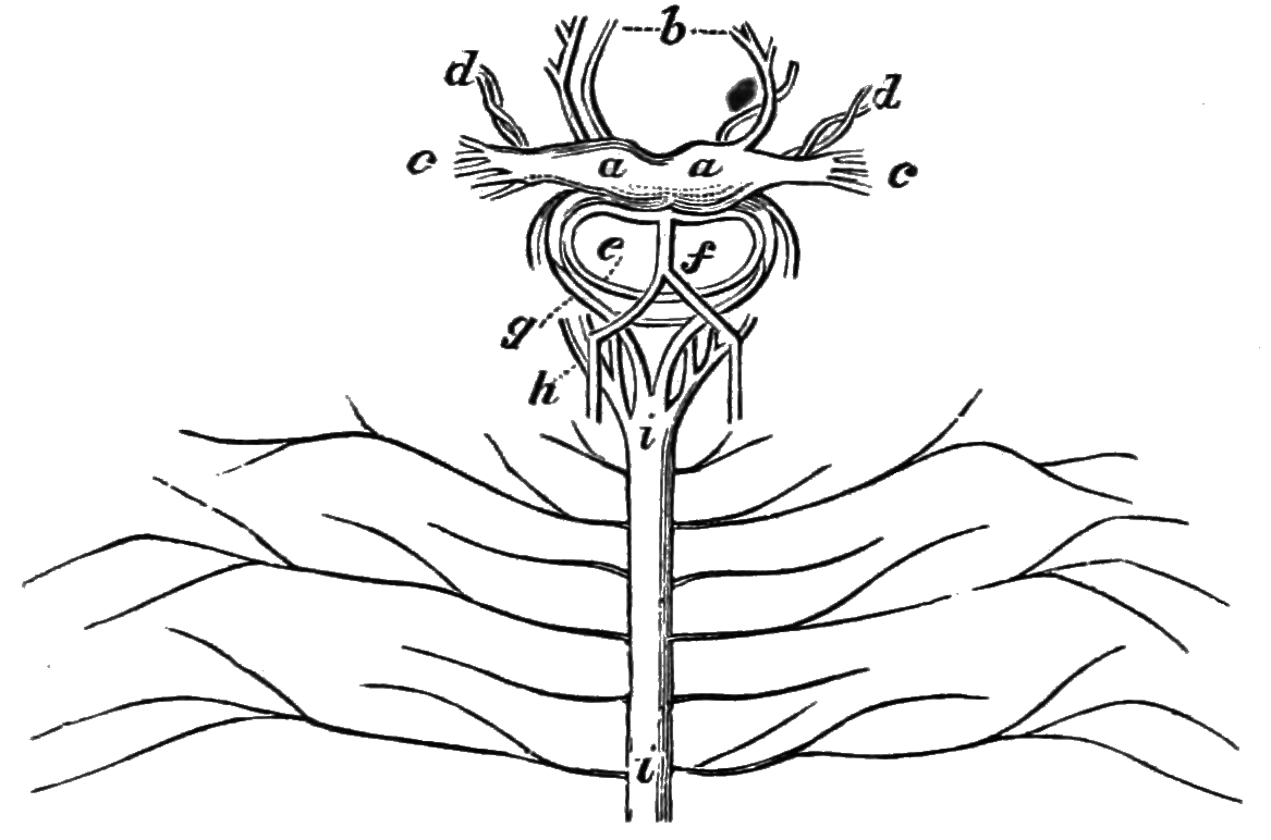 Nervous System Coloring Pages Nervous System Coloring Pages