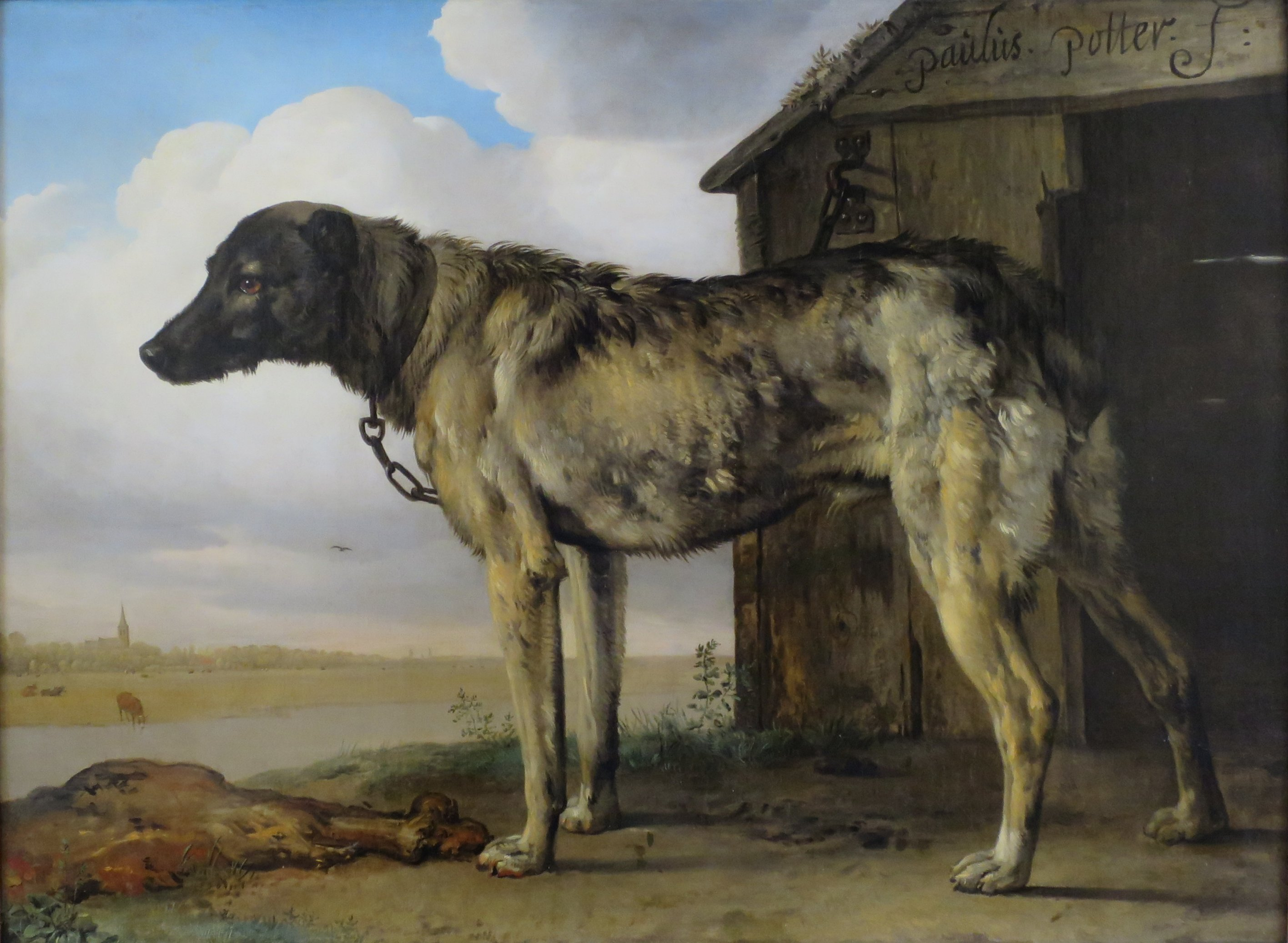 Dog Name Dutch