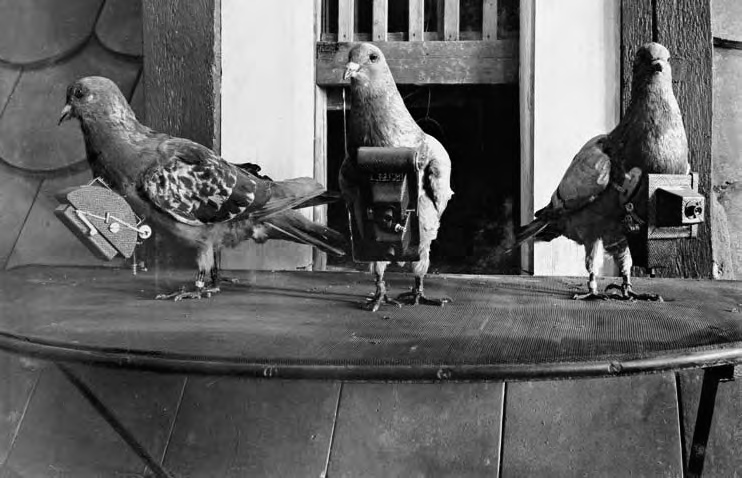 Fichier:Pigeoncameras.jpg