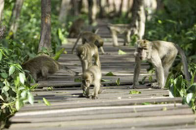Image result for pulau kembang