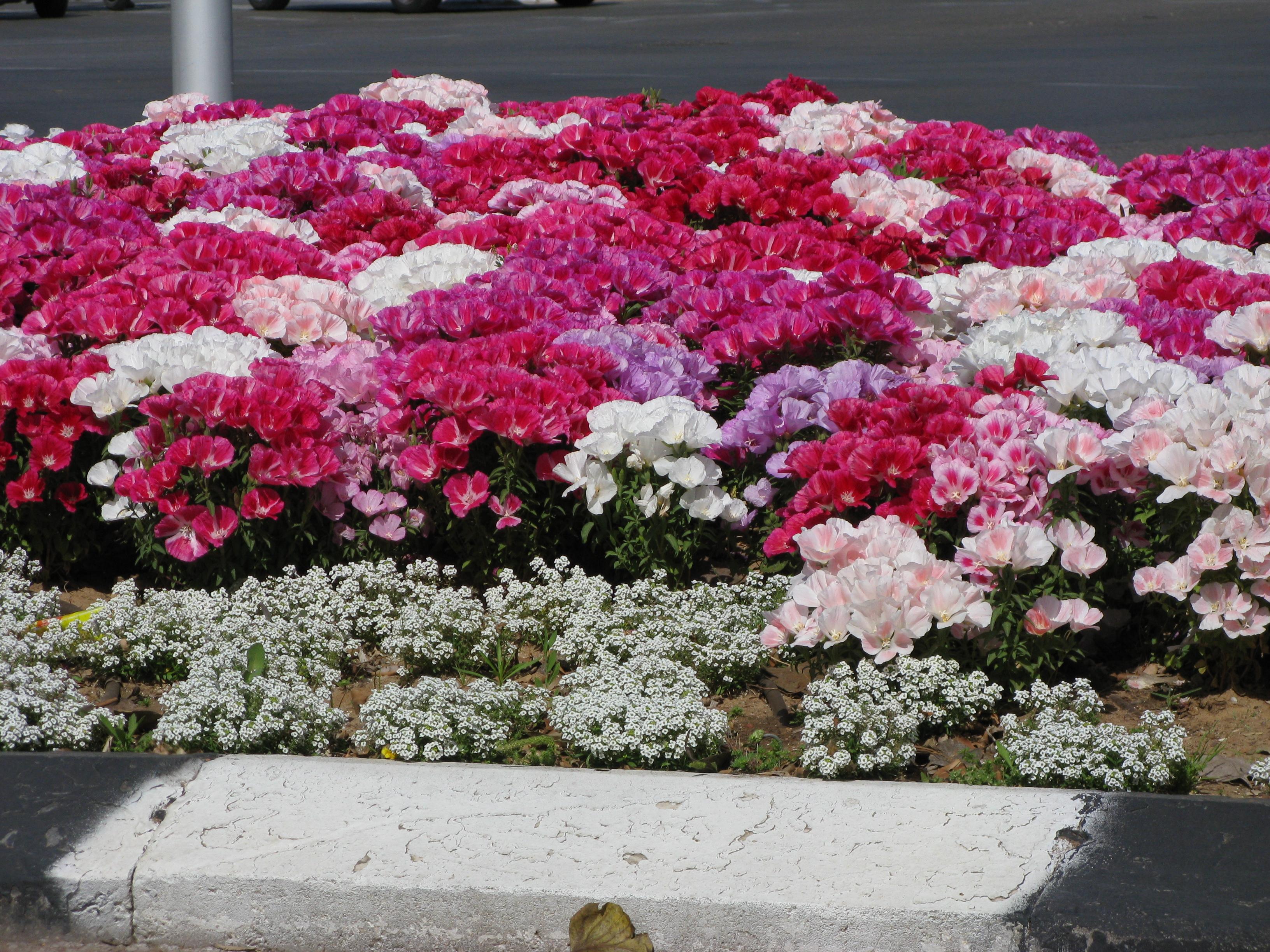 Названия и фото многолетних цветов для улицы