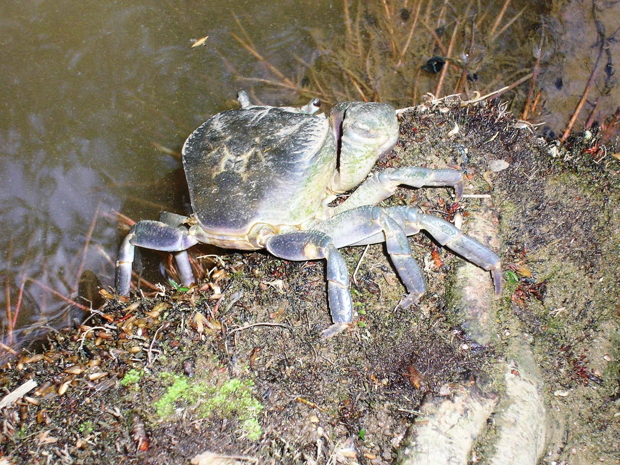 Crab And Crawfish Cakes Fying Harpoon