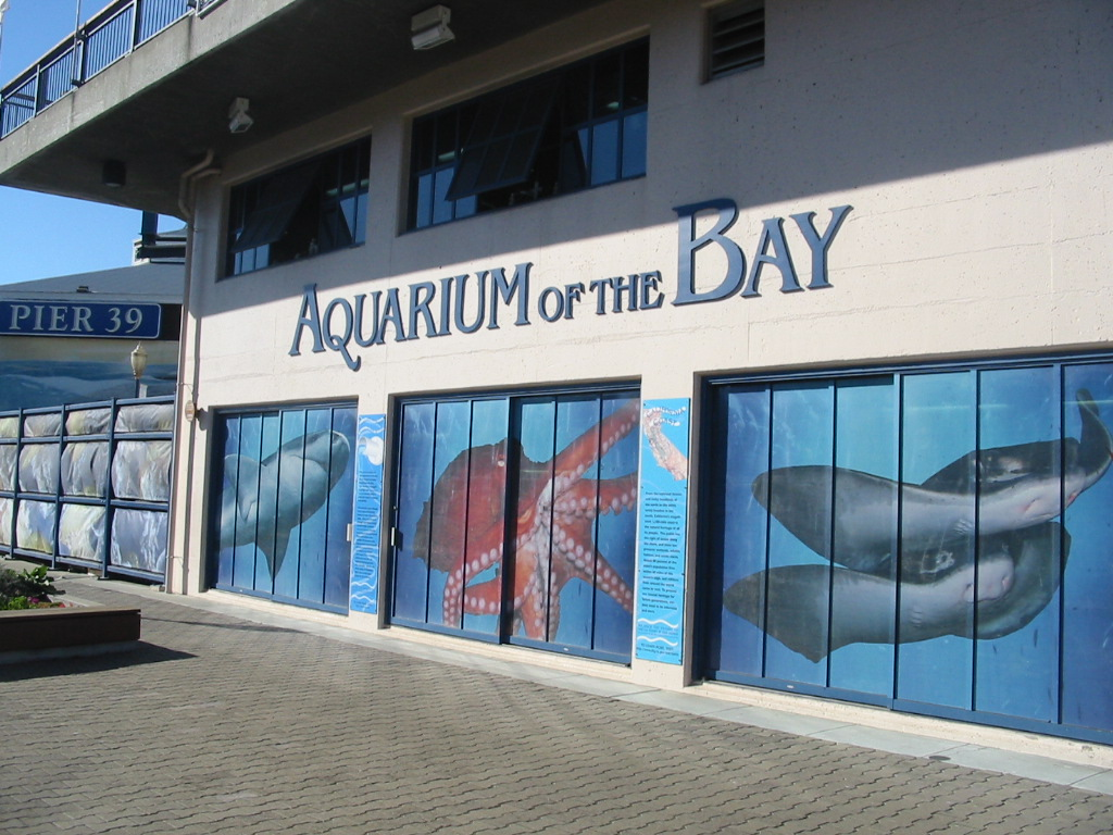 Aquarium of the Bay - San Francisco Family Attractions