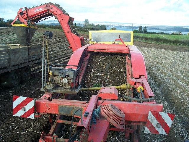 potato picking machine