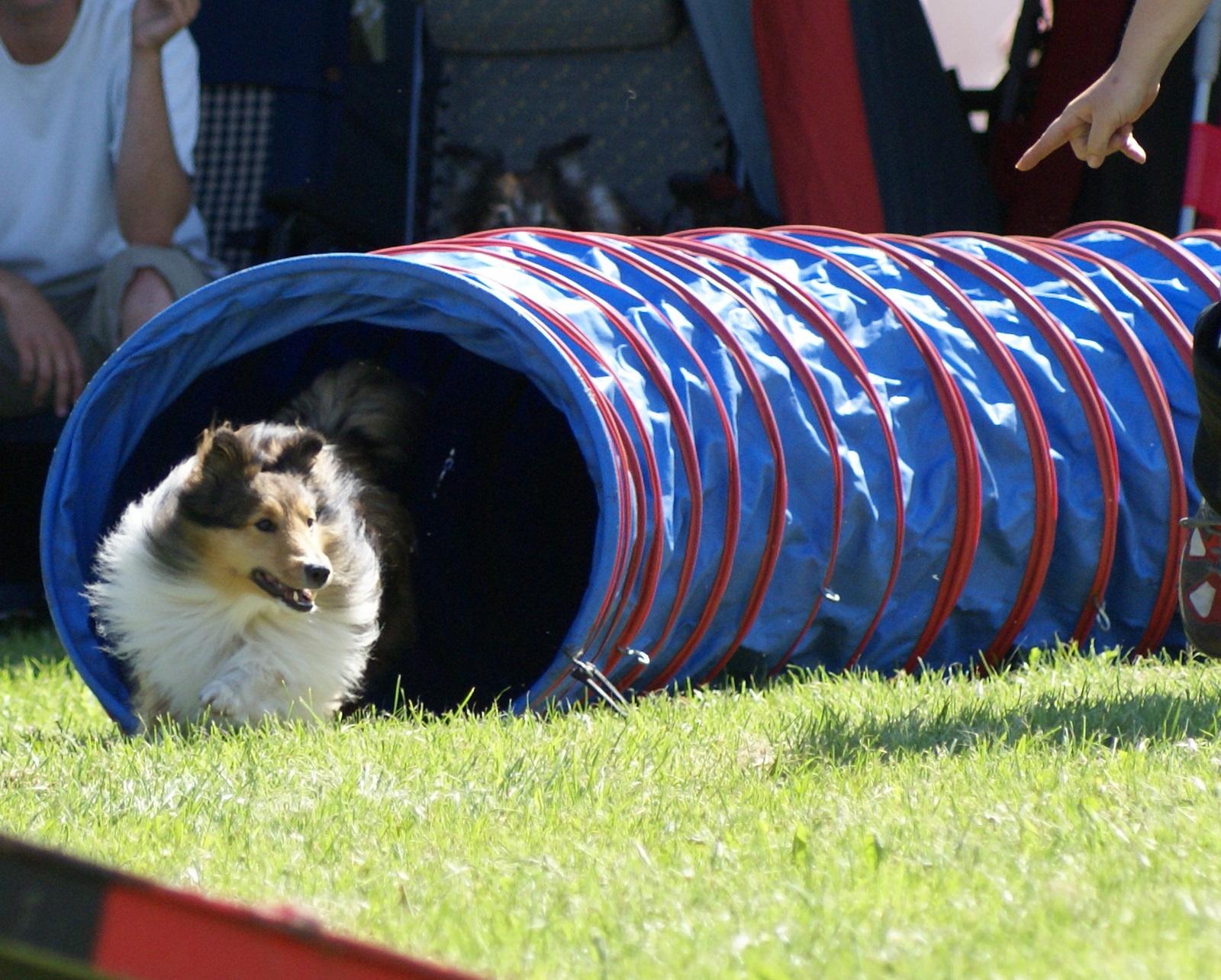 Agility Course Dog Breeds