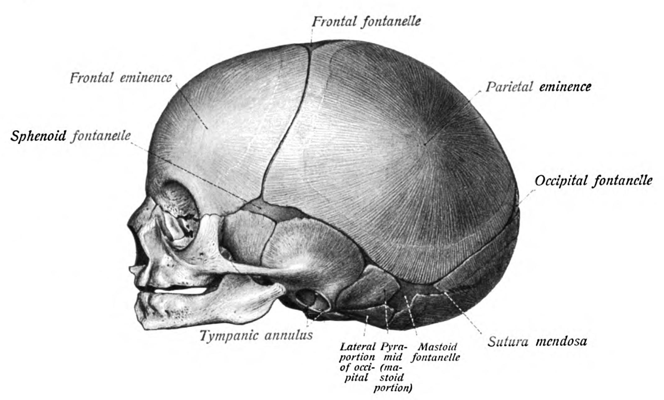 Wiki: Skull - upcScavenger