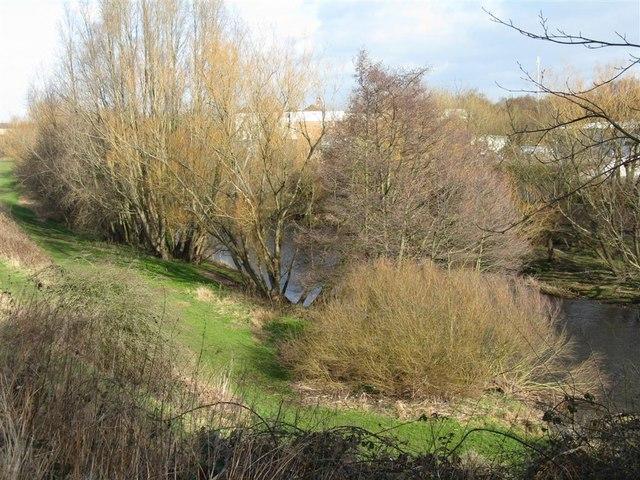 The River Esk at Haugh Park - geograph.org.uk - 1178934