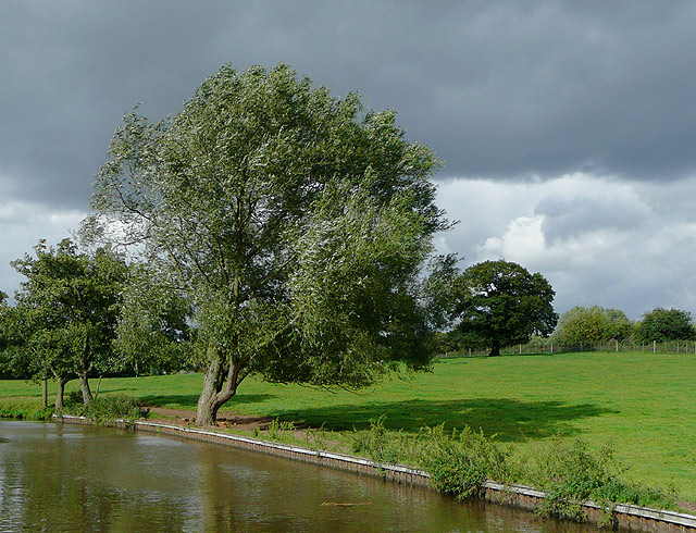The canal and pasture at Barlaston, Staffordshire - geograph.org.uk - 1479605