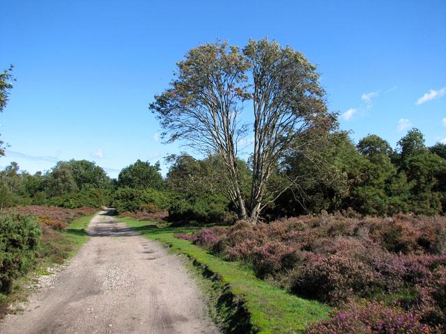 Track through Westleton Heath - geograph.org.uk - 2067996