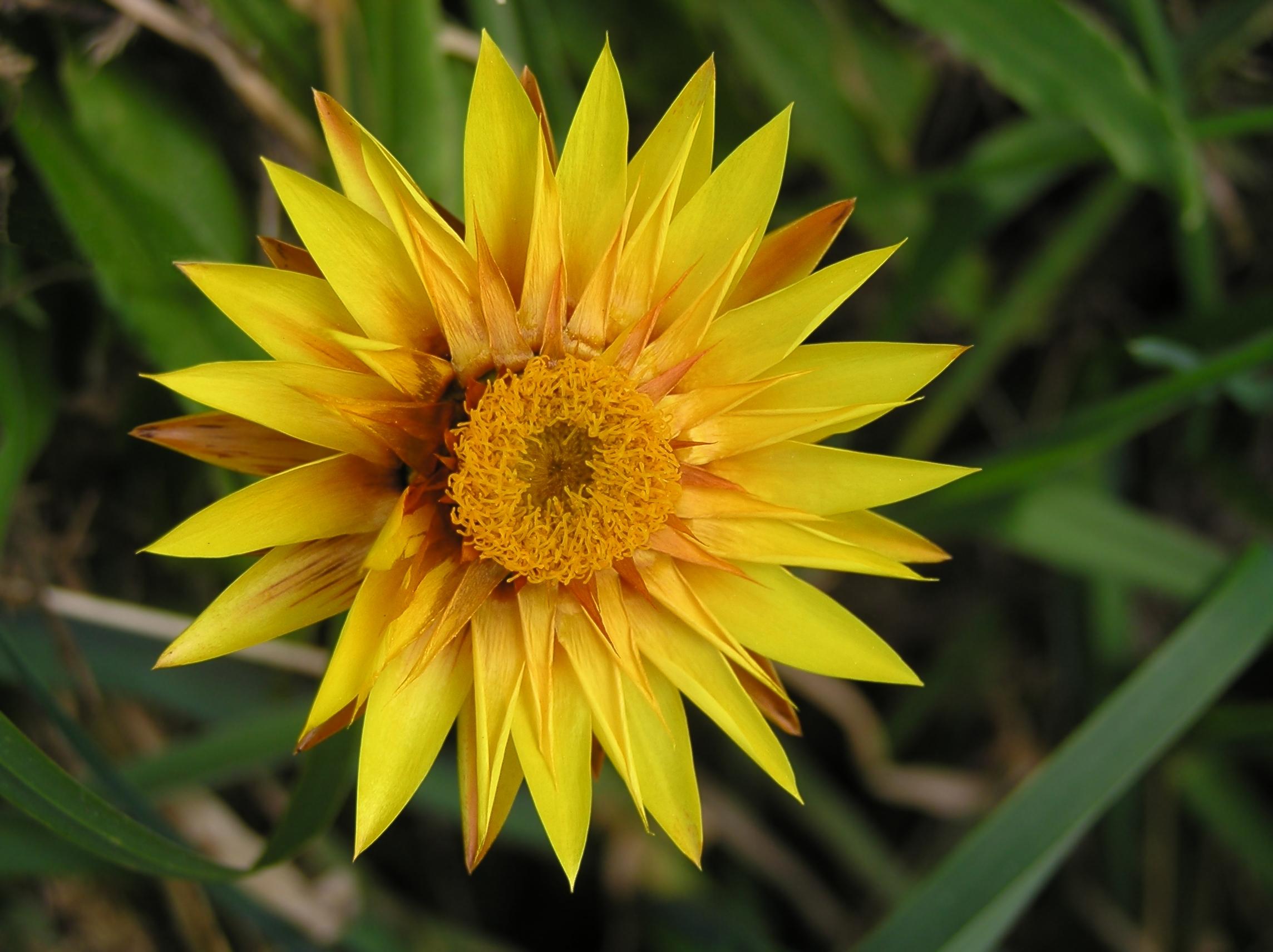 File Yellow orange flower