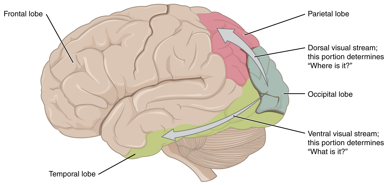 File:1424 Visual Streams.jpg - Wikimedia Commons