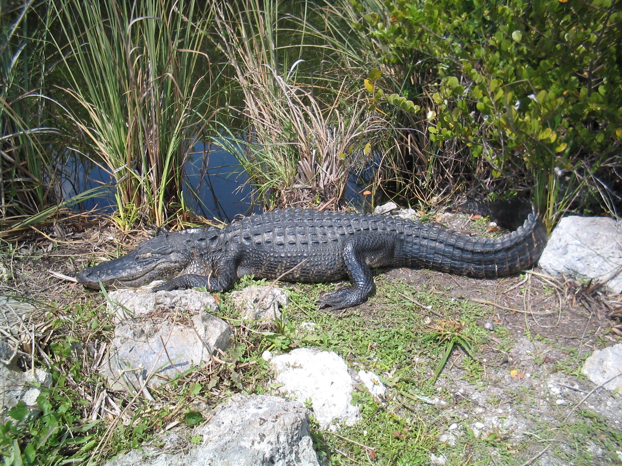 Parc Nacional dels Everglades