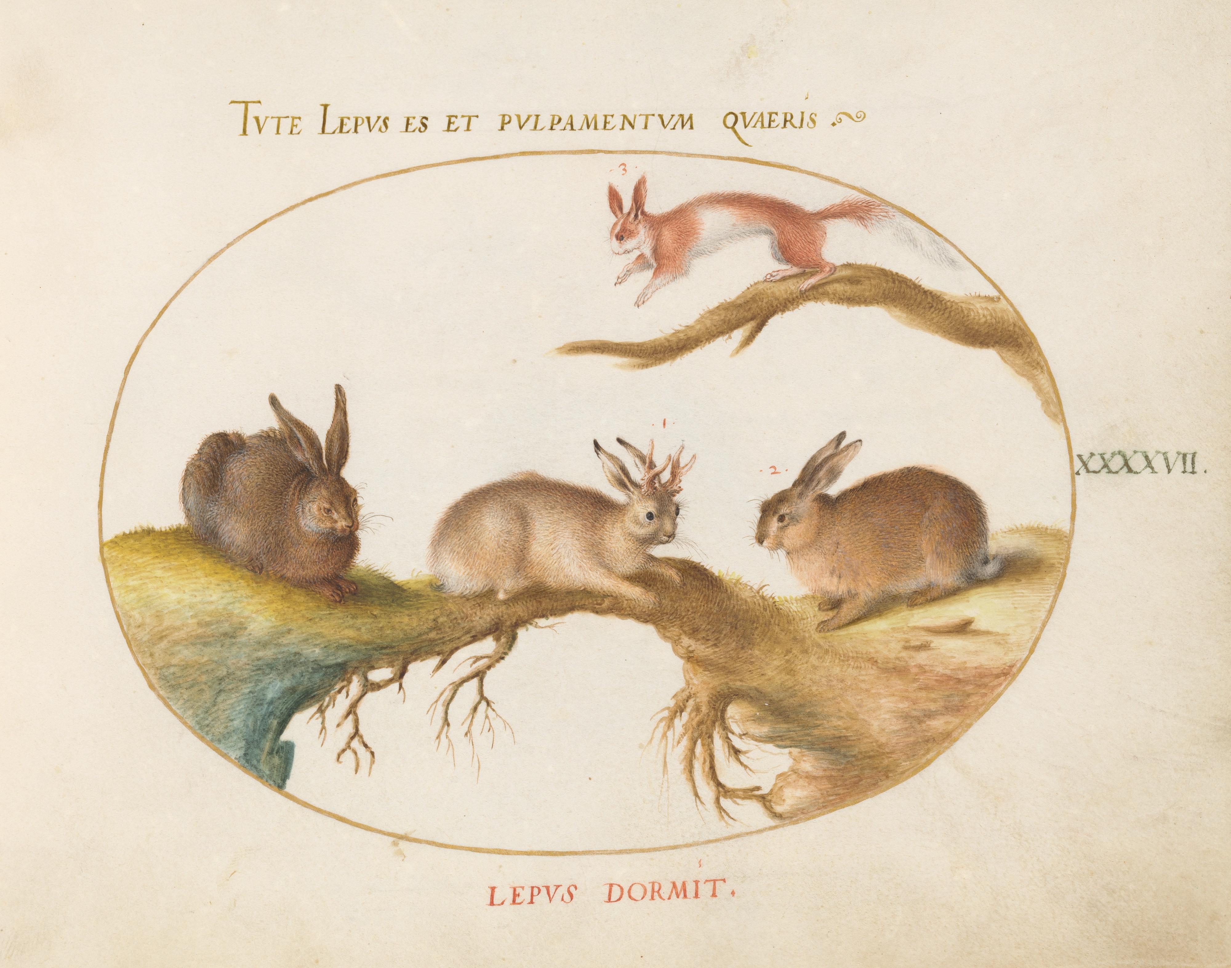 File:Animalia Qvadrvpedia et Reptilia (Terra) Plate XLVII.jpg