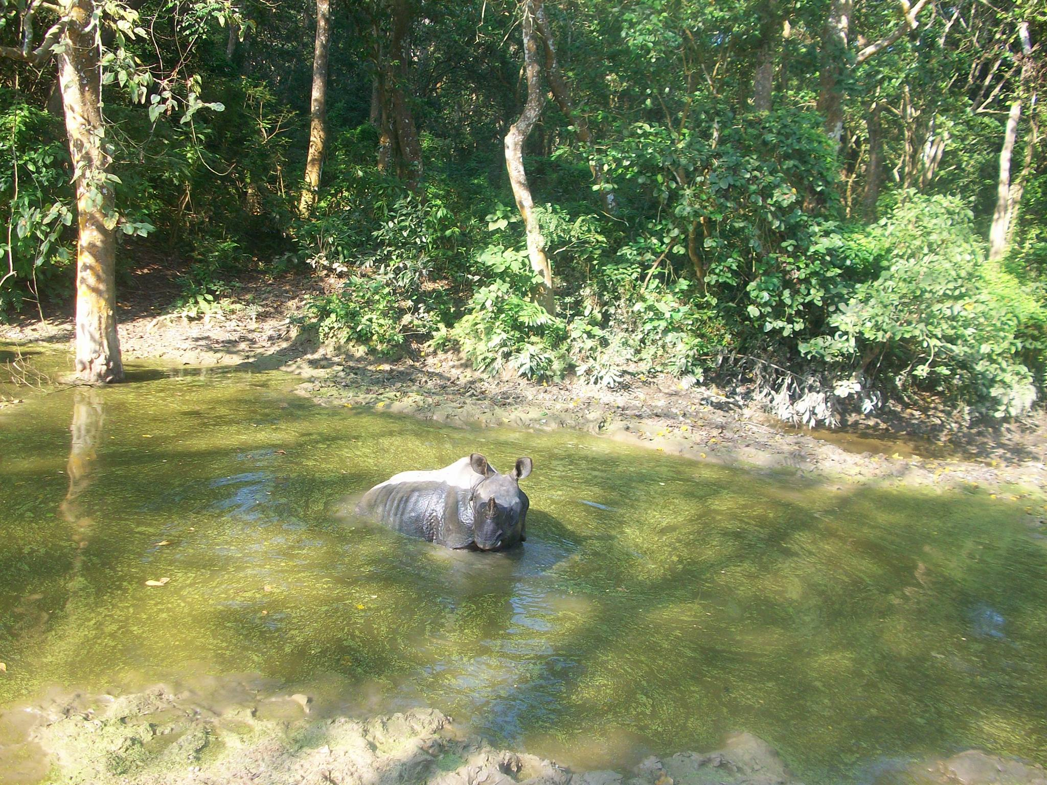 File:Asian Elephant Safari in Chitwan National Park, Chitwan