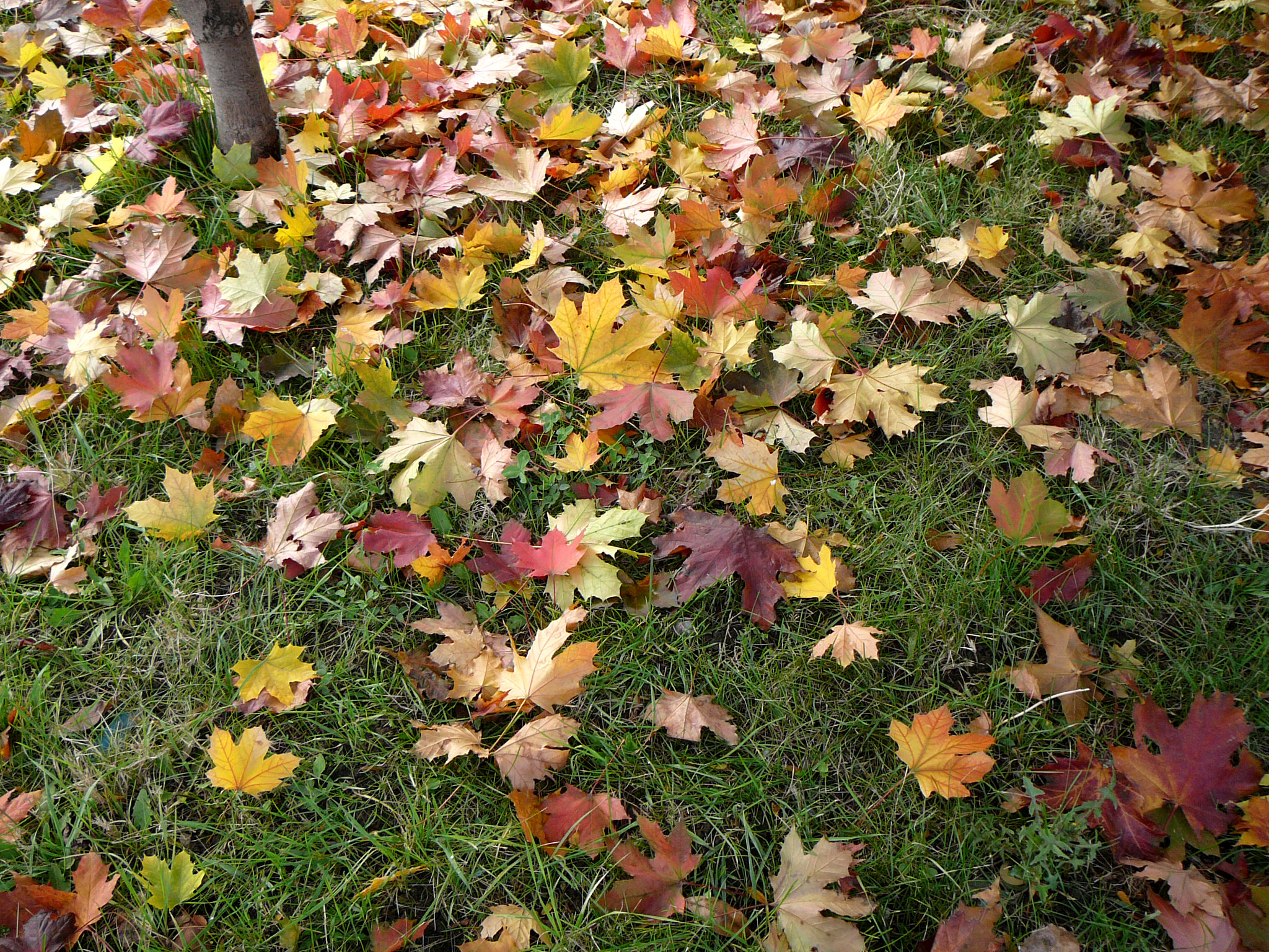 Cheap Fall Landscaping Ideas As The Garden Grows