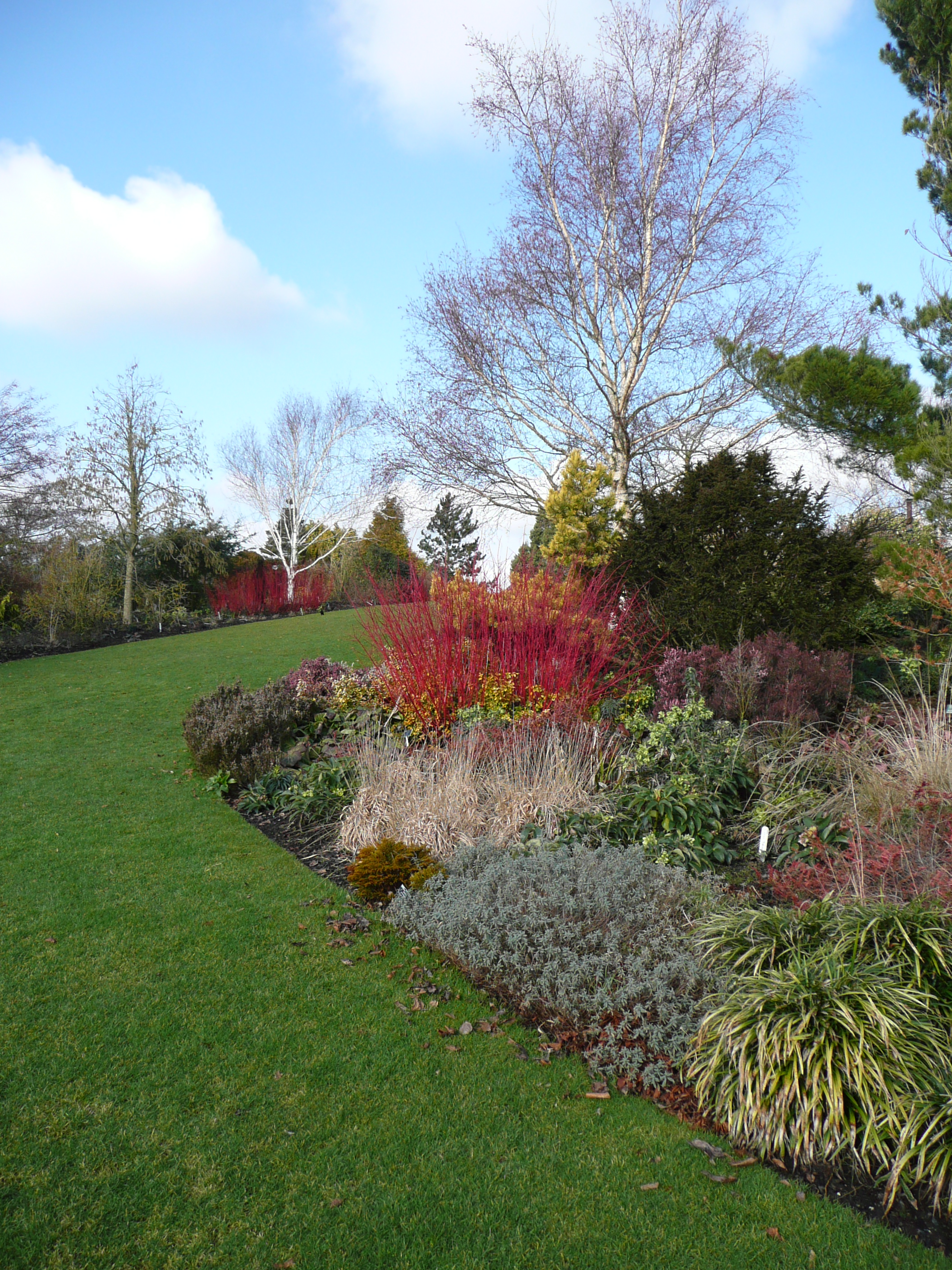 file colourful winter border at hyde hall gardens geograph org