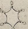 Ernyődeszka (heraldika).PNG