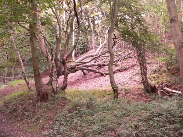Eston Nab woods